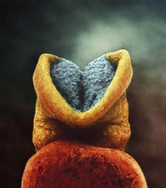 Le cerveau commence à se développer dans l'embryon