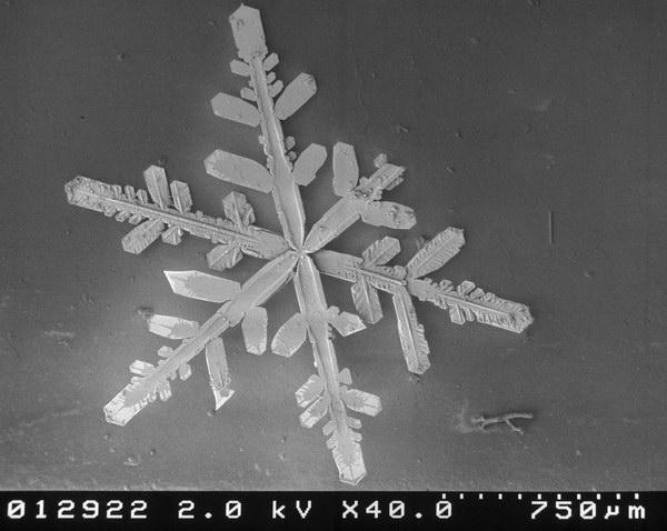 flocons de neige au microscope