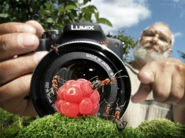 Dompteur de fourmis