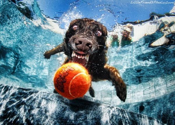 chien-piscine-6