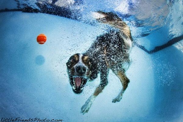 chien-piscine-7
