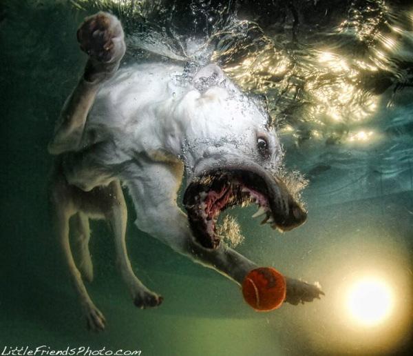 chien-piscine-9