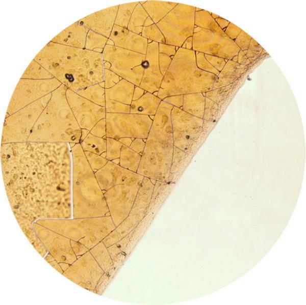 Boissons populaires au microscope