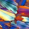 Aperol au microscope