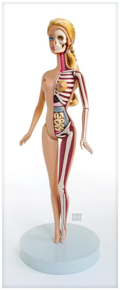 anatomie des Barbie