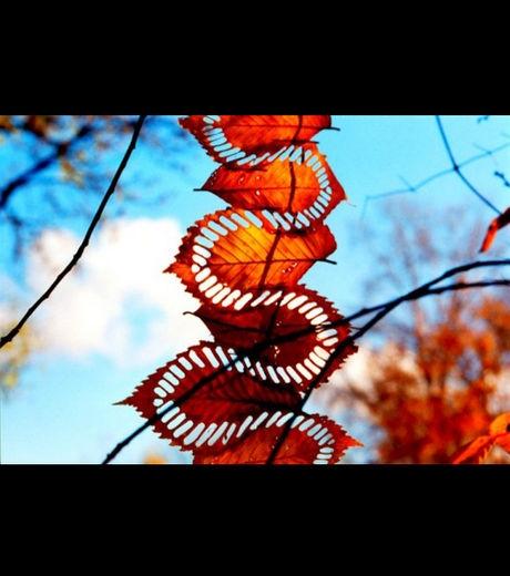 Land-Art-Nature-Feuille-1