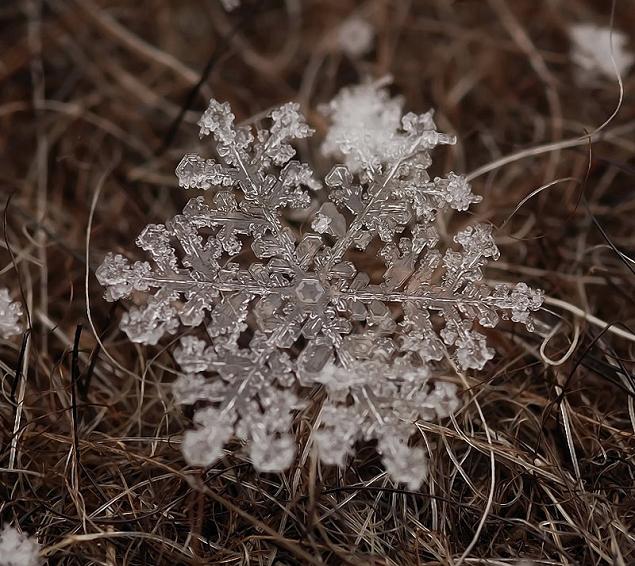 flocons neige loupe macro photographie wikilinks 121 Des flocons de neige à la loupe par Andrew Osokin