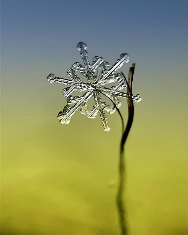 flocons neige loupe macro photographie wikilinks 151 Des flocons de neige à la loupe par Andrew Osokin