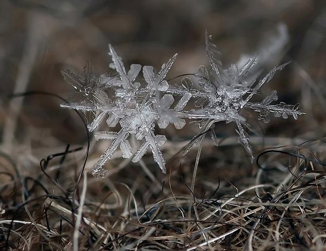 flocons neige loupe macro photographie wikilinks 201 Des flocons de neige à la loupe par Andrew Osokin