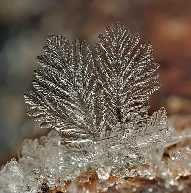 flocons neige loupe macro photographie wikilinks 3 Des flocons de neige à la loupe par Andrew Osokin