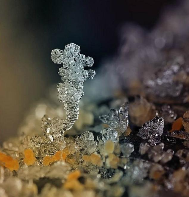flocons neige loupe macro photographie wikilinks 7 Des flocons de neige à la loupe par Andrew Osokin