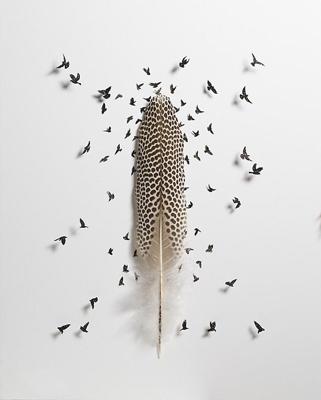 Des oiseaux dans des plumes - Signification des plumes d oiseaux ...