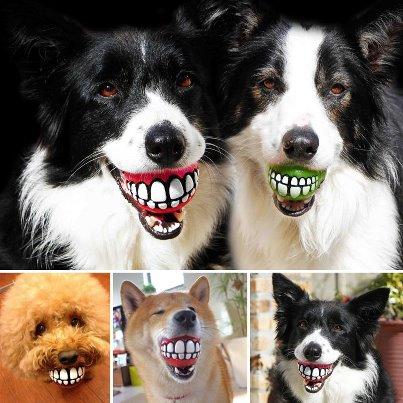 jouet-chien-animal-depressif-depression-balle-