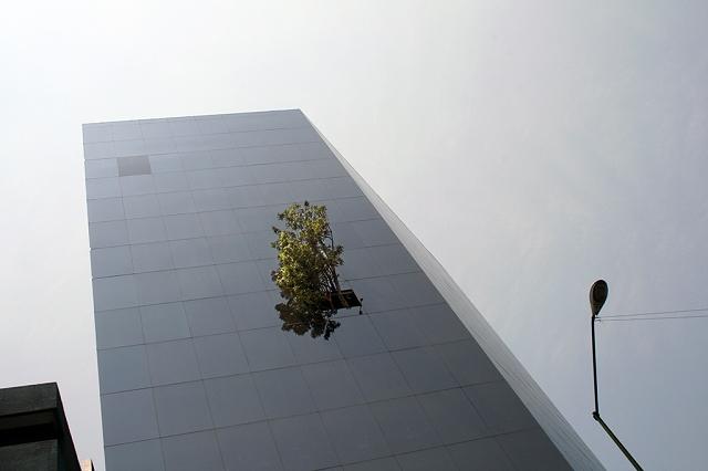 immeuble Telcel à Mexico City arbre1