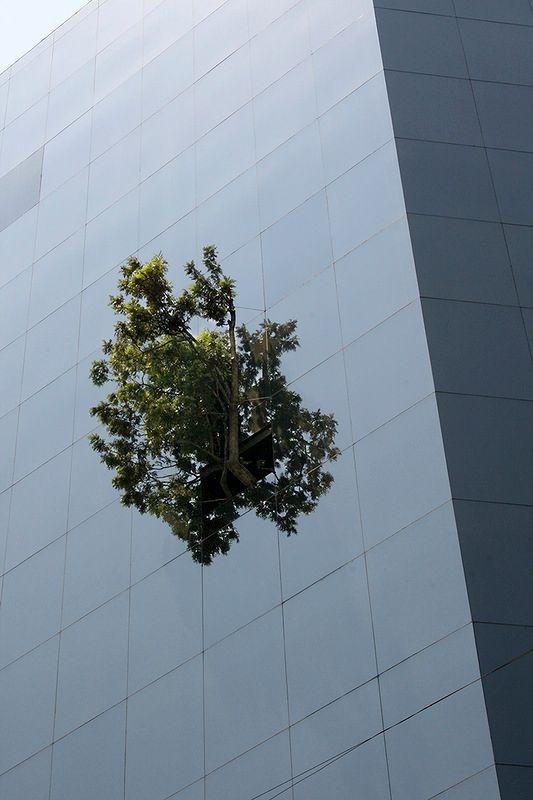 immeuble Telcel à Mexico City arbre2