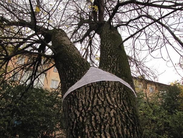 string-Art , jardin pudique, habiller les arbres