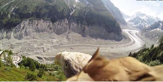aigle-en-vol-video-mer-de-glace-