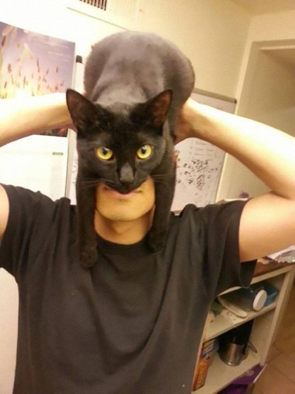Catman-chat-Batman-