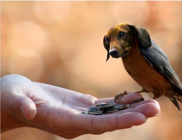 image-photoshop-chien-oiseau-