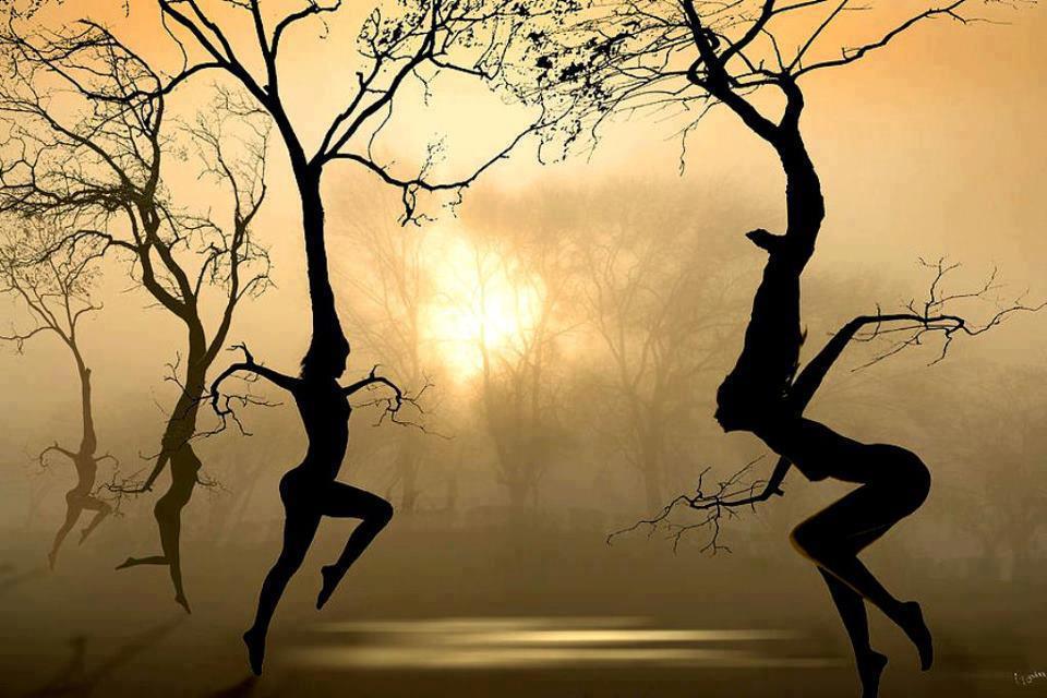 Dancing Trees Igor Zenin