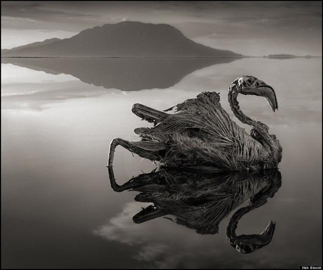 animaux-pierre-Natron-lac- 4