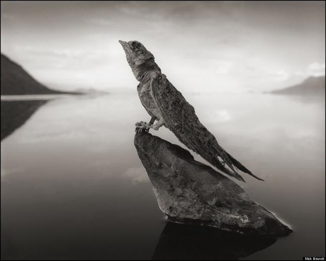 animaux-pierre-Natron-lac- 6