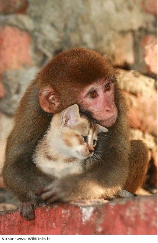 monkey-vs-cat