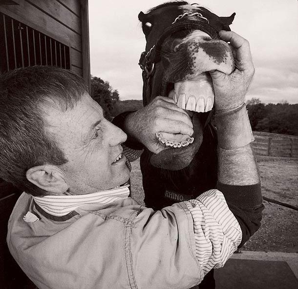 Dentiste pour cheval