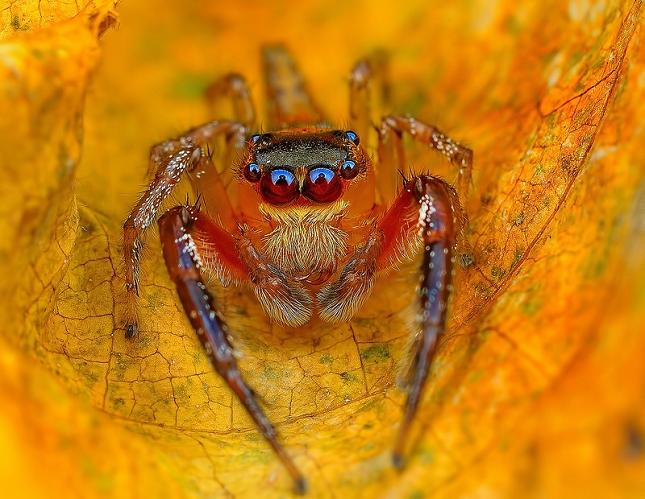 araignees-exotiques-regard-1