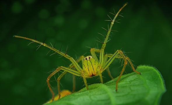 araignees-exotiques-regard-2