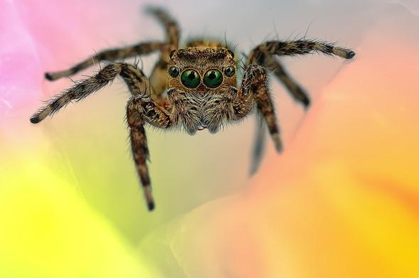 araignees-exotiques-regard-3