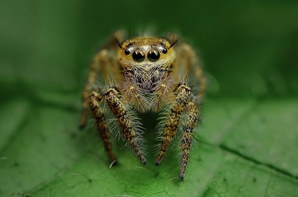 araignees-exotiques-regard-5