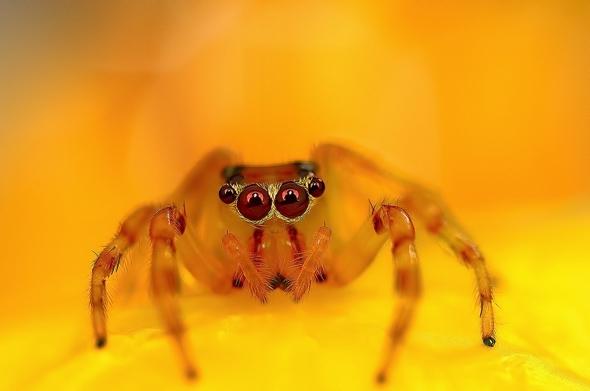 araignees-exotiques-regard-7