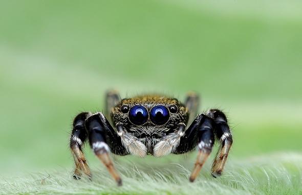 araignees-exotiques-regard-9