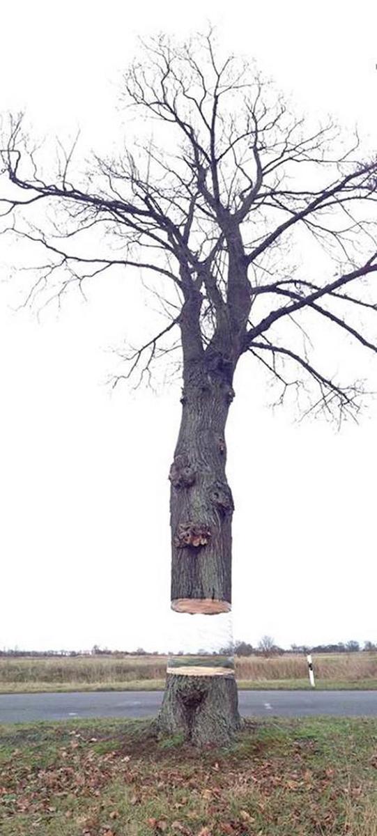 Árbol-pintado-engaño-