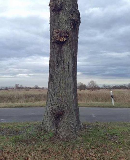 arbre-peint-illusion-2