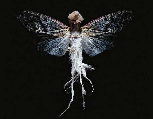 insect-women-seroussi-6