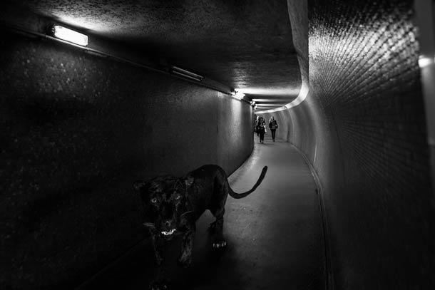 faune-urbaine-9