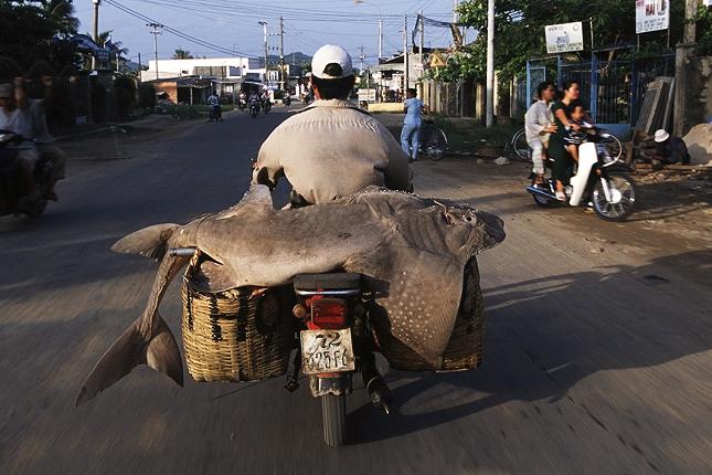 Moto-Vietnam-10