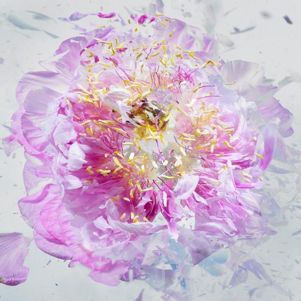 fleurs-5