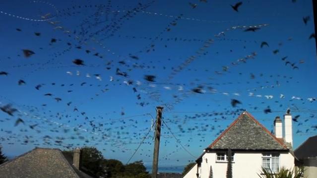 vol-oiseaux-migration