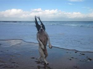 PERFECT-TIMING-PIC-LOL-DOG-19