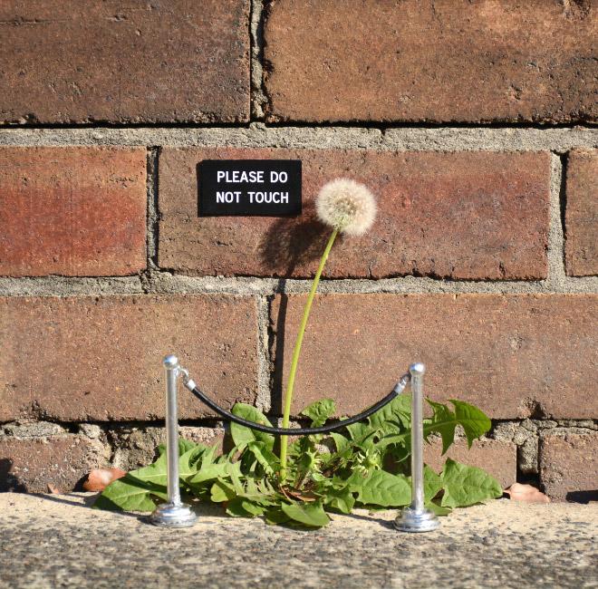 sign-flower