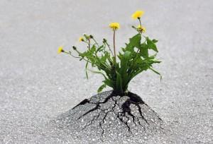 survie-plantes-milieux-hostiles- 17