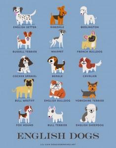 races-de-chiens-monde-7