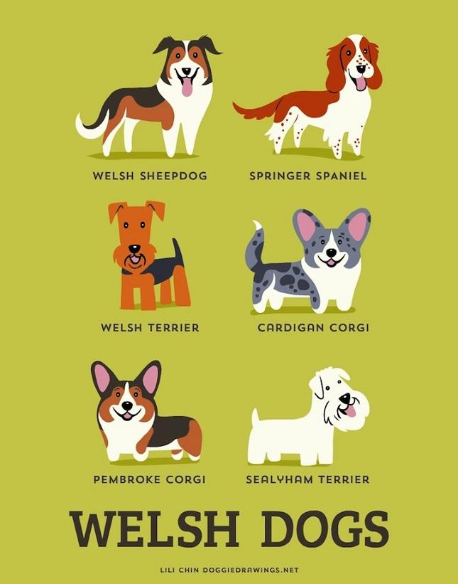 Illustrations - 192 races de chiens classés par pays d'origine