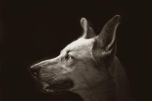 portrait-animalier-4