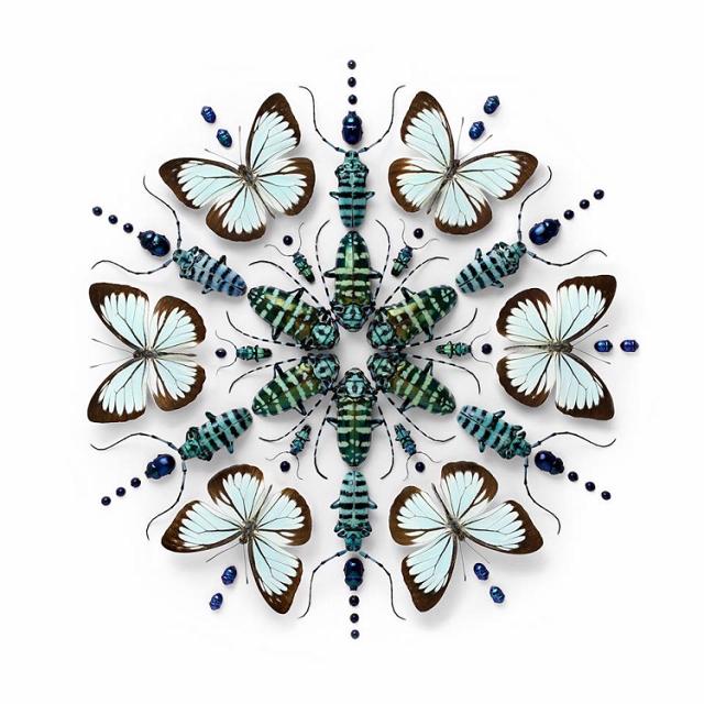 mandala-insecte3