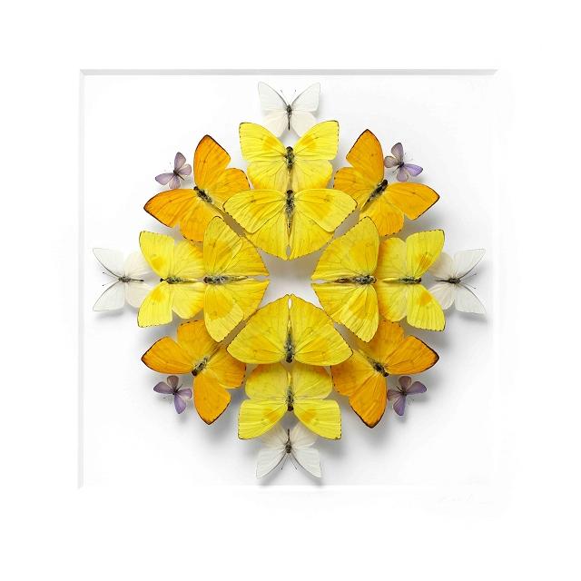 mandala-insecte7