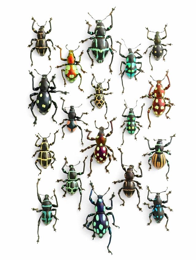 mandala-insecte8
